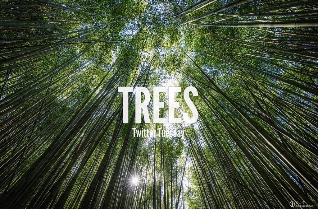 Twitter Tuesday: #Trees I  Whoever plants a tree, plants a hope