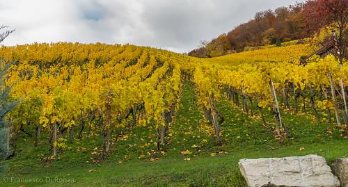 autumn trees plant nature schweiz herbst natur pflanze bäume aargau ch zeit ort englisch stadtbild wettingen naturund bildtyp lanschaftsfotografie