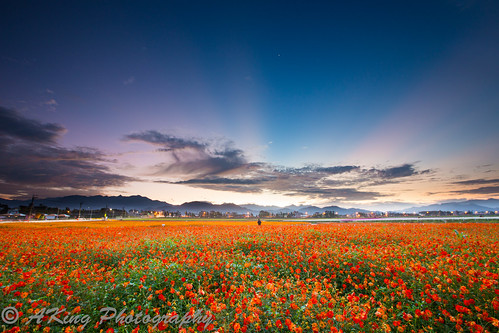 morning autumn sky cloud mountain flower nature field sunrise landscape dawn countryside scenery taiwan taichung 台灣 台中 花海 新社 日出 flowersea 晨 霞光 波司菊