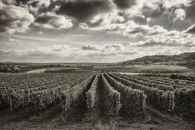 Vineyard country...