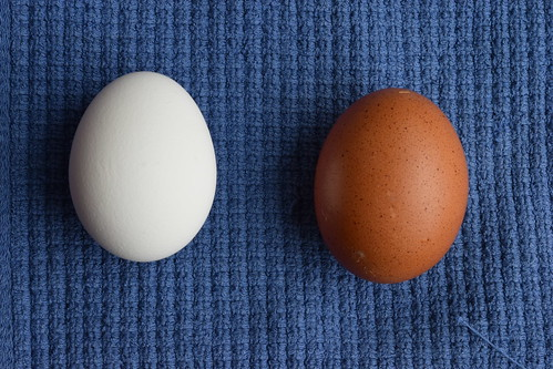 Farm Egg Vs. Mass Produced Egg | by The Abundant Kitchen