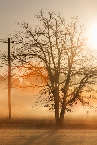 tree sunrise goldenhour golden backlit concordma canon5dmarkii