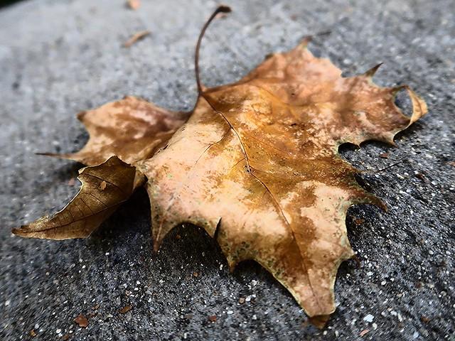 1 Leaf Ruffled