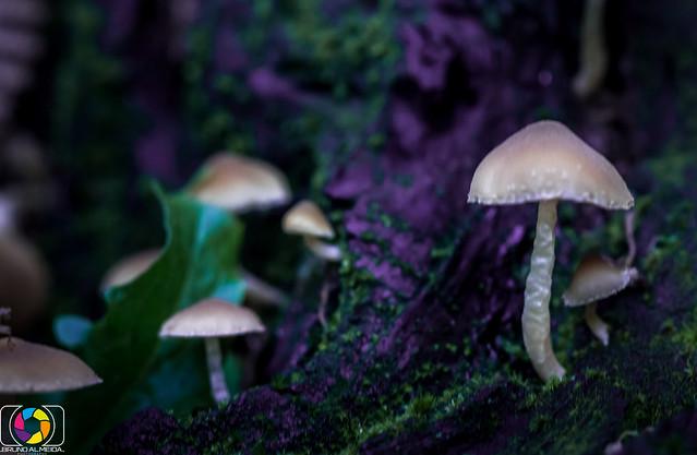 Mushroom in a fantasy land
