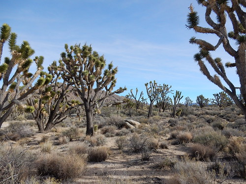 Mojave National Preserve - Teutonia Peak Trail - 5