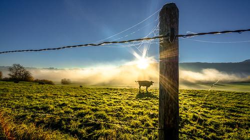 autumn misty fog sunrise fence landscape bayern bavaria kuh cow nebel herbst wiese zaun landschaft sonne sonnenaufgang sonnenstrahlen morgens dunst allgäu