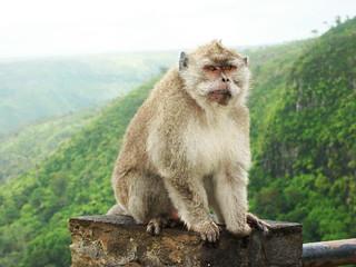 Affe auf Mauritius