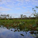 02 Viajefilos en Australia, Kakadu NP 054
