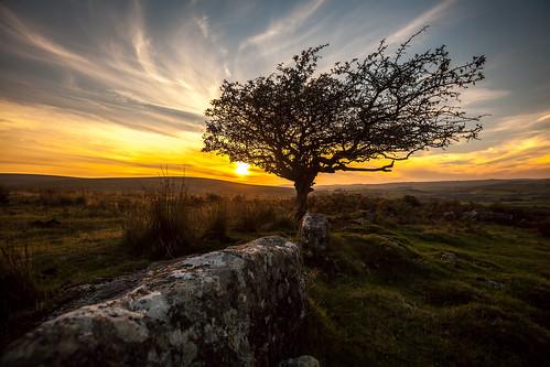 autumn grass rock canon heaven devon granite handheld colourful bliss striking dartmoor hawthorn moorland