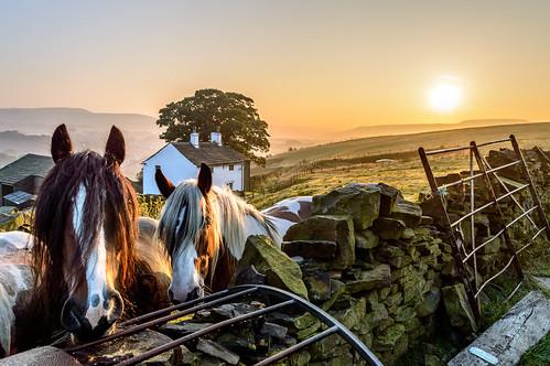 uk morning england horses horse sun house mist tree field misty stone wall rural sunrise landscape dawn nikon gate britain farm hill cottage lancashire hills moors rise dslr moor drystonewall pennines moorland rossendale nikond3200 helmshore haslingden d3200 johnhartley musbury johnners61