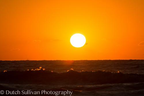 ocean galveston birds sunrise texas unitedstates ships