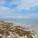 Yaeyama Islands okinawa Japan