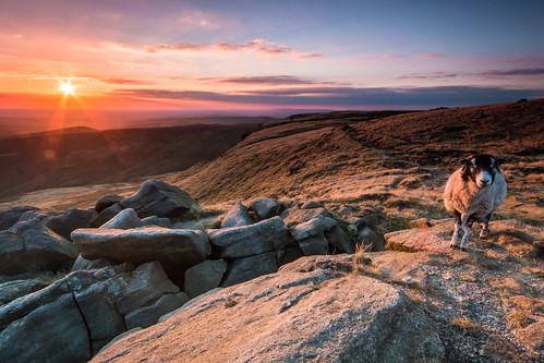 light sunset england sky orange sun grass animal clouds canon landscape nationalpark rocks warm view purple sheep walk wildlife peakdistrict sigma wideangle flare 1020 kinderscout sigma1020 70d ndgradfilter canon70d