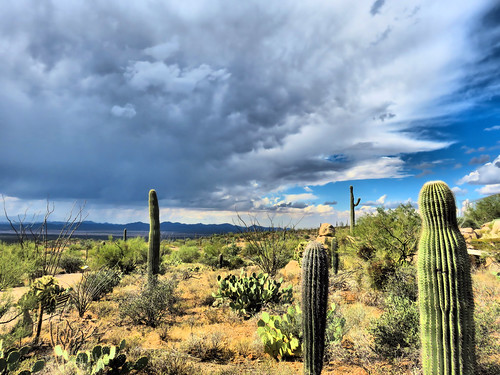 Arizona-Sonora Museum HDR 01-20161103