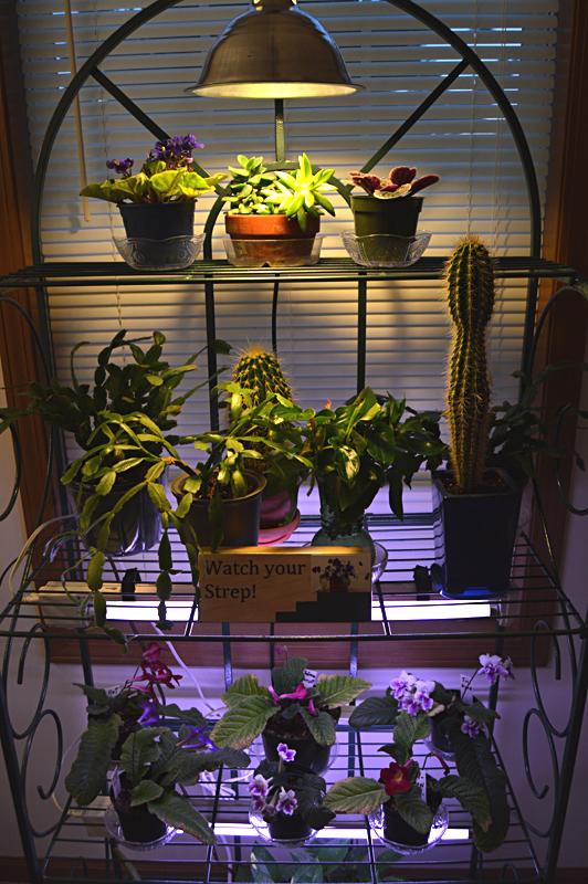 Light Garden 3
