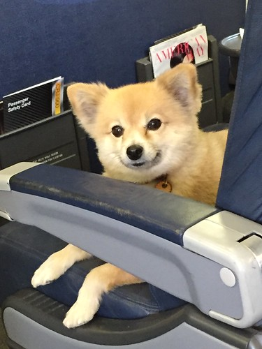 First Class Dog | by HockeyholicAZ