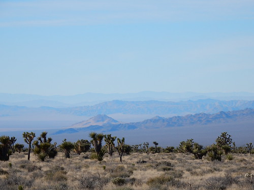 Mojave National Preserve - vallei