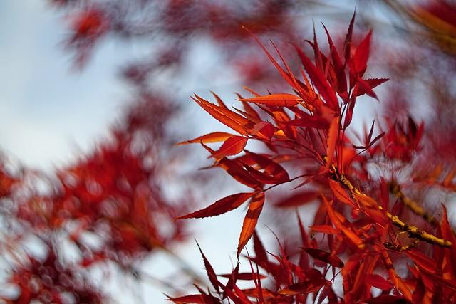 #AutumnLeaves - Flickr Friday