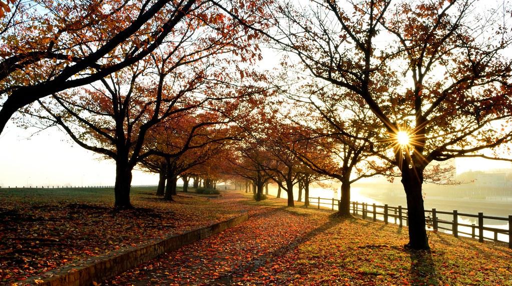 Arakawa Autumn Dawn