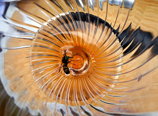 Trop bue l'abeille, Occitanie, France