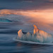 The Iceberg by Vincenzo Mazza Photography