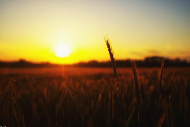 Slavic Sunset