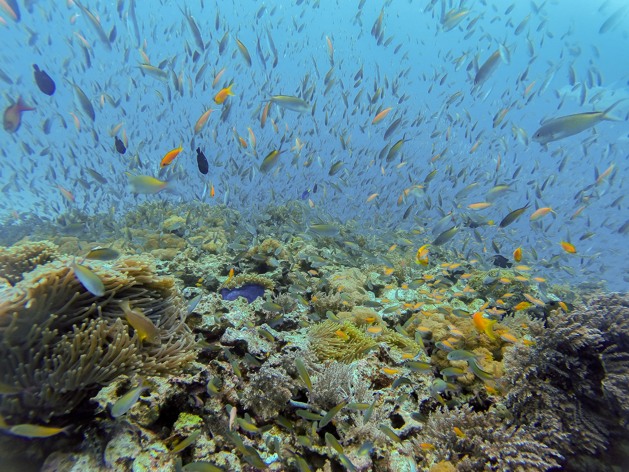Reef Fishes @ Mnemba Atoll