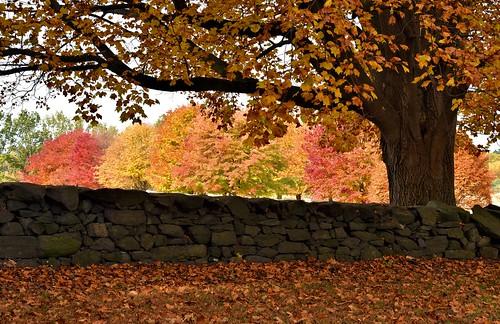 autumn landscape delaware brandywinecreekstatepark nikond750