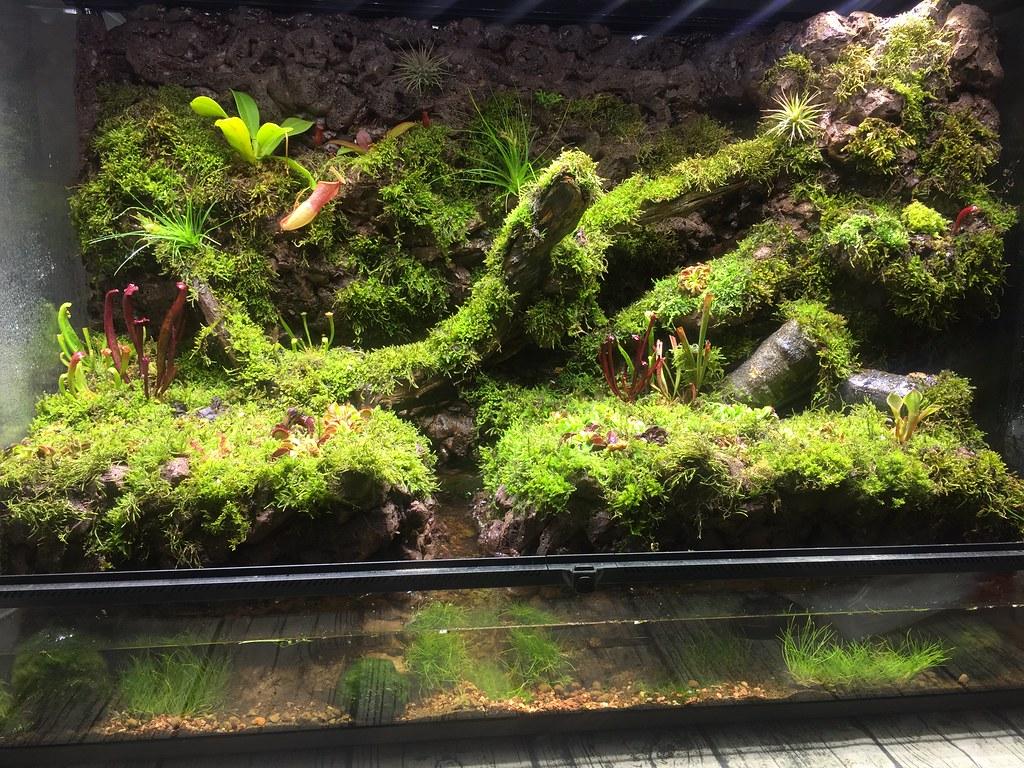 Carnivorous Plant Terrarium Zongye Quek Flickr