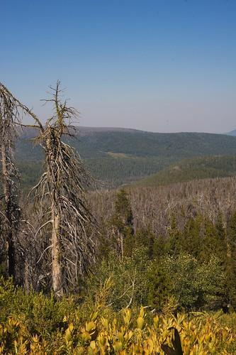 oregon lakecounty deadpines pinebeetledamage gearhartmountainwilderness fremontforest