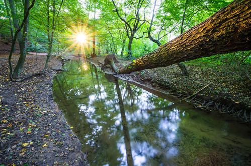 autumn trees sunset sun nature water river germany landscape deutschland forrest pentax herbst natur bach landschaft sonne wald bäume langzeitbelichtung sunstar leverkusen longtimeexposure sonnenstern