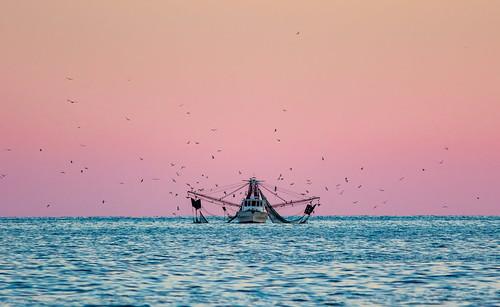 ocean pink blue red sea sky seascape sc water birds landscape marine gulls southcarolina northcarolina sunsetbeach trawler shrimpboat littleriver mhazephoto