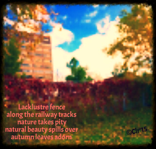 oct 14 2015 fall coloured fence