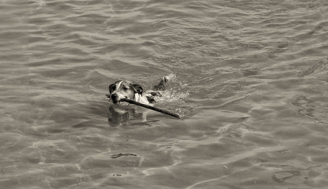 Dogs bathers