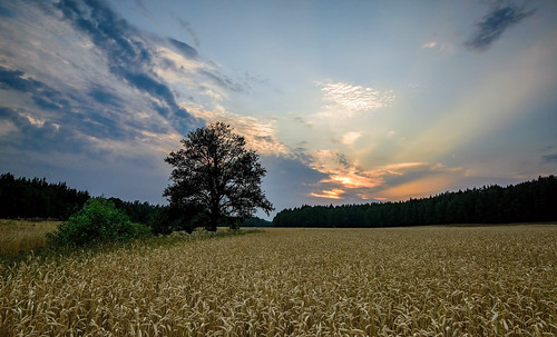 sunset sky plant tree field grass clouds forest landscape sweden outdoor sverige scandinavia uppland upplandsbro