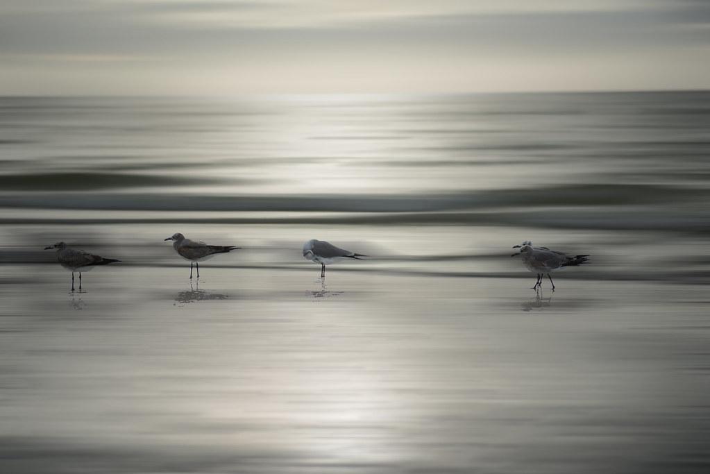 Sanibel Island Beach Birds