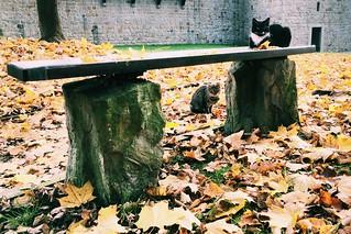 Kocia ławka / Cat's bench   by Rrrodrigo