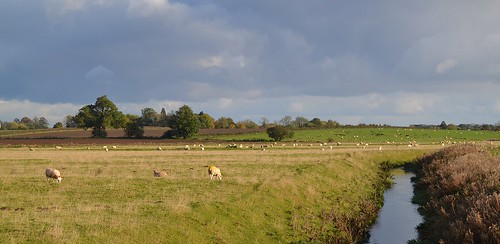 lincolnshire fields sheep kmsnapshots