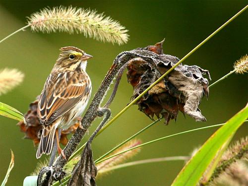 bird nature canon birdwatcher backyardbirding naturewatcher connecticutbird newenglandbird