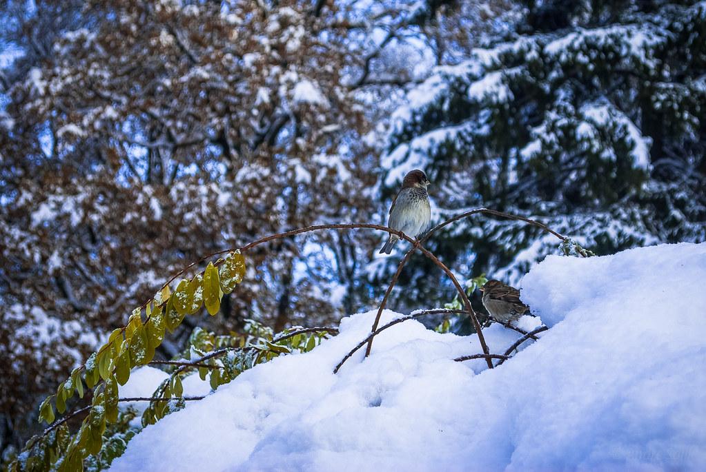 A warming catch. Зимняя парочка! 12:29:42 DSC_0150