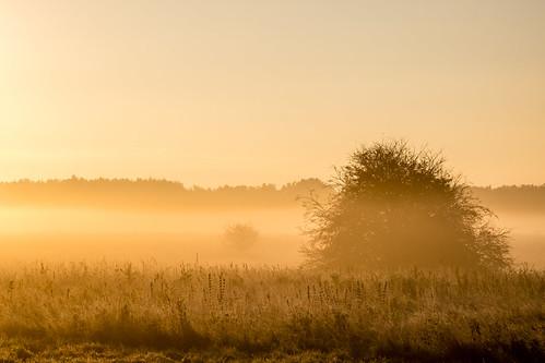 autumn cold fall field fog frost fuji fujifilm golden heath mist nature norfolk reserve sunrise thetford tree trust wildlife winter wretham xt1 england unitedkingdom gb