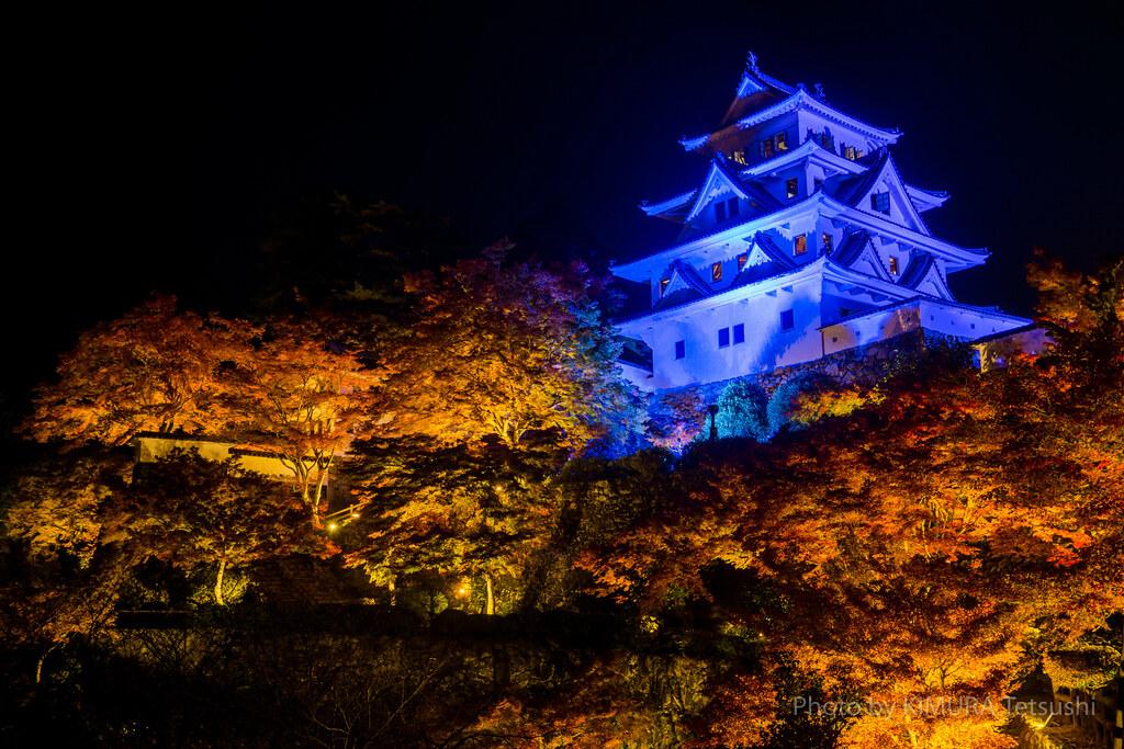 Gujo Hachiman Castle and Autumn Maple Leaves