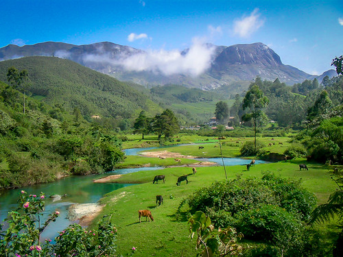 india green rock gardens river cow tea indian peak kerala pasture dairy munnar raji philipose westernghat anamudi rajipv
