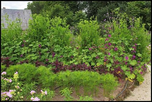 (41) Le potager de couleurs de Chaumont-sur-Loire 2012 22349063900_7707e471b7
