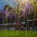 VVSB - Katwijk 3-0 KNVB Beker 2016 2017