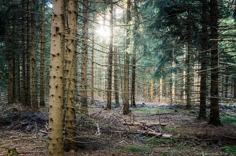La grande traversee du massif central - Les forêts de Margeride