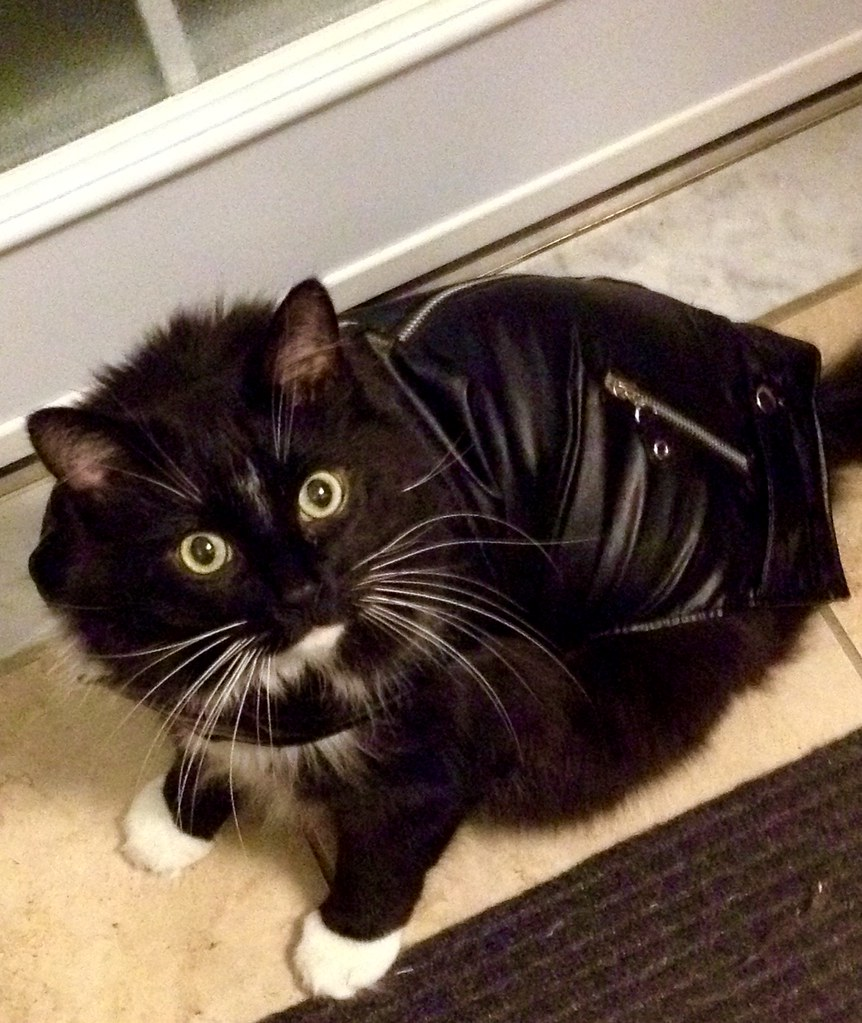 giant cat in a leather jacket | helloflower! | Flickr