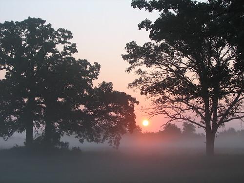 trees orange sun mist nature sunshine fog wisconsin sunrise oaks mukwonago