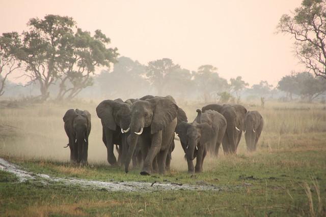 Botswana studiereis 2015 - Martijn