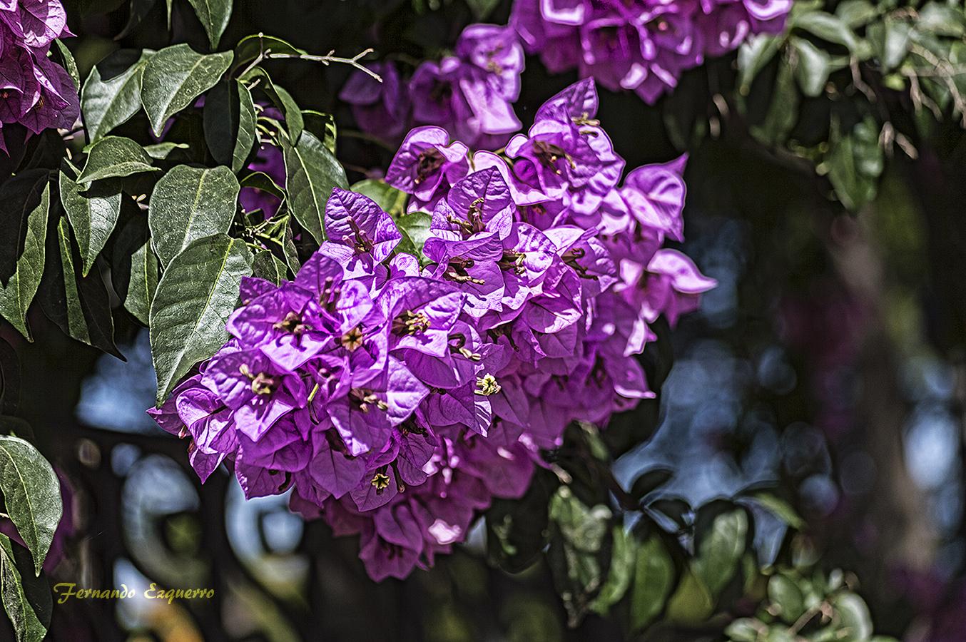 Visita al Jardín Botánico